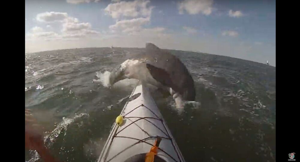 US Kayaker Gets Smacked by Dolphin