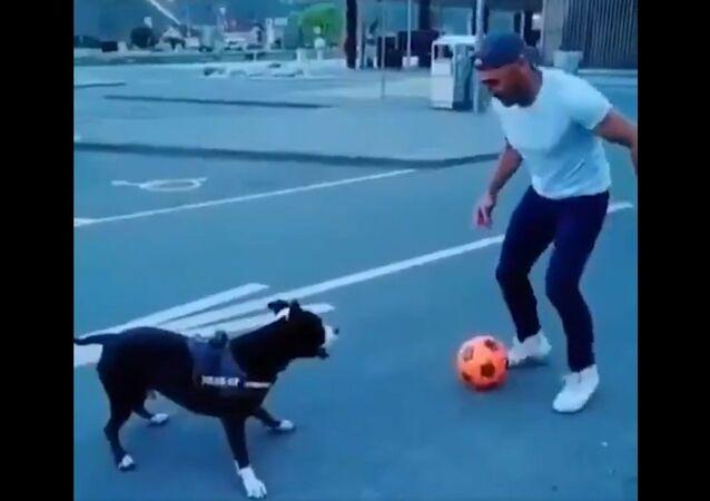 If Paolo Maldini was a dog...