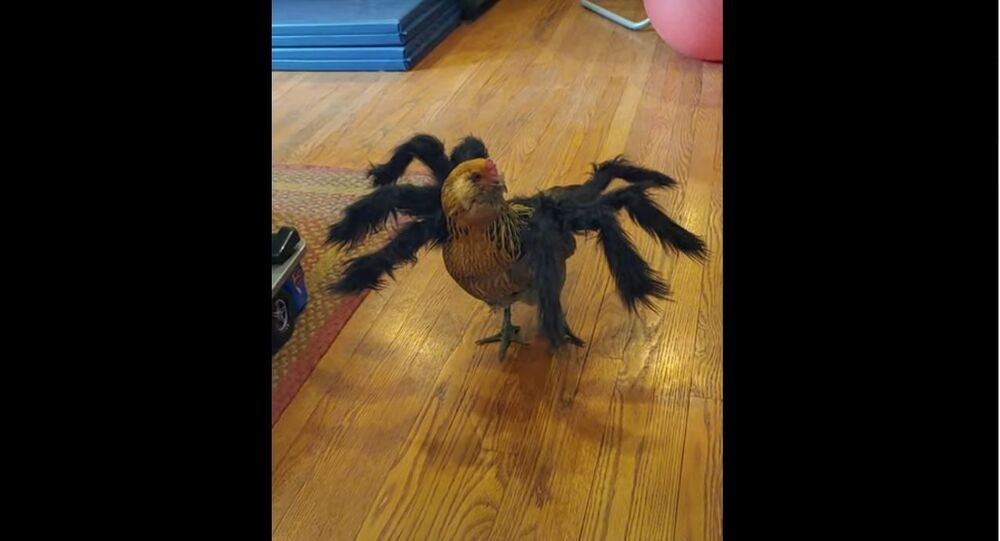 Halloween Ready Chicken Will Haunt You in Dreams If Seen at Night