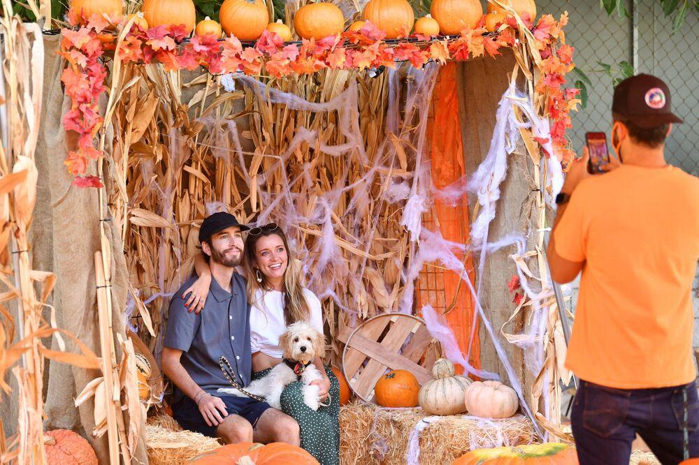 Shoppers at Mr. Jack O'Lanterns Pumpkin Patch on 3 October 2020 in Los Angeles, California.