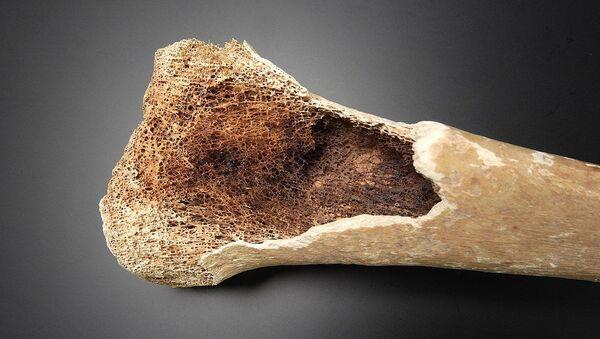 Detail of bone tissue - Sputnik International