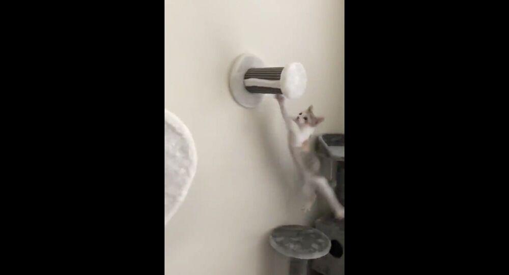 Acrobatic Kitty Takes Tumble After Perch Dismount