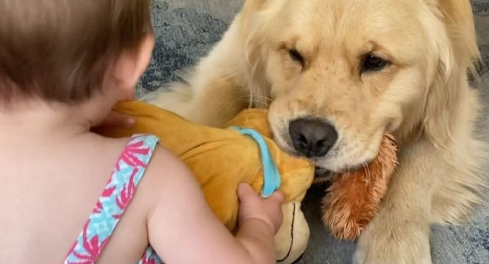 Cute Baby Playing 'Tug of War' With Golden Retriever Will Make You Go Aww