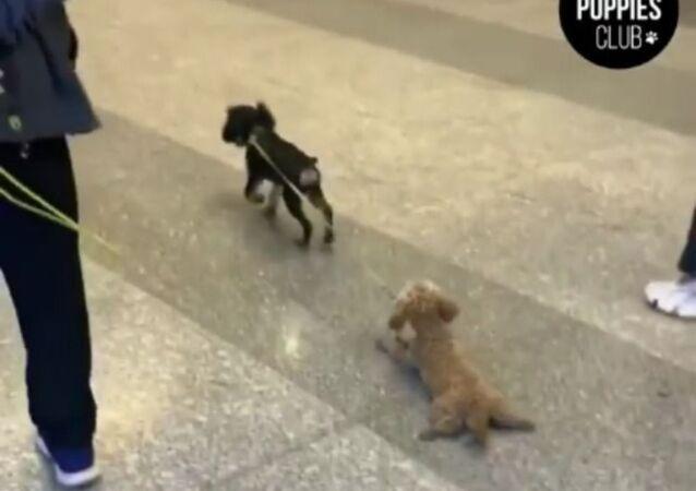 Elon, We Have A Problem: Dog Invents New Form of Transportation