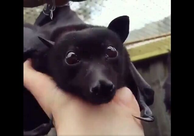 This bat looks like a winged puppy
