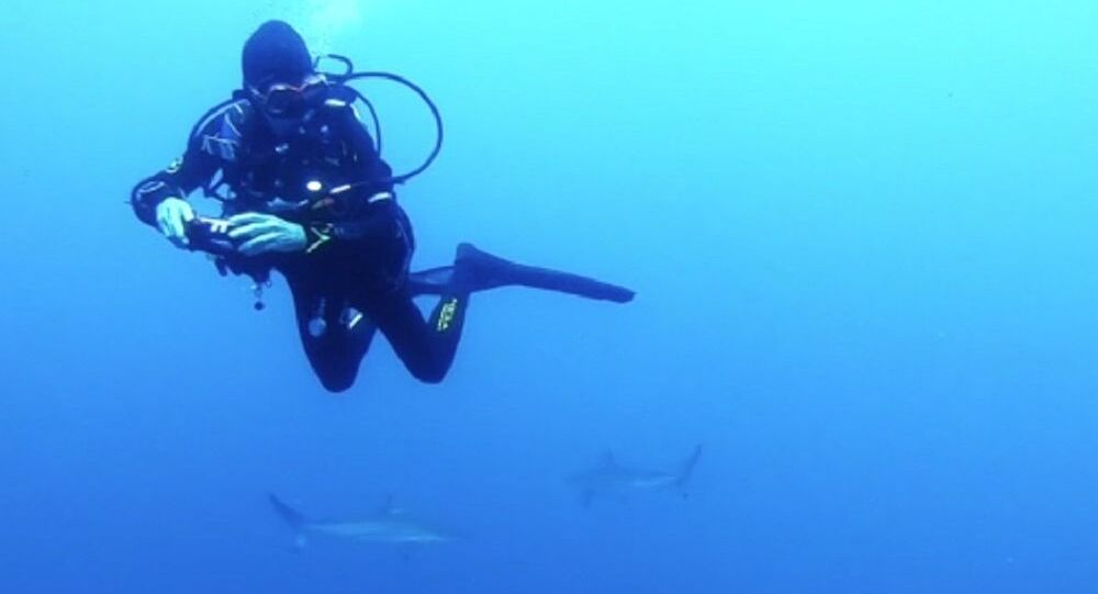 Shocked scuba diver is confronted with a 'wall' of 200 sharks off Queensland