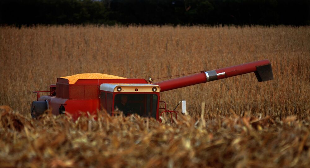 In this Sept. 22, 2015 photo, a central Illinois farmer races against the sunset to harvest his cornfield field near Farmingdale, Ill. With most of this year's corn and soybeans harvested, the U.S. Department of Agriculture is boosting its expectations for the size of the crops.