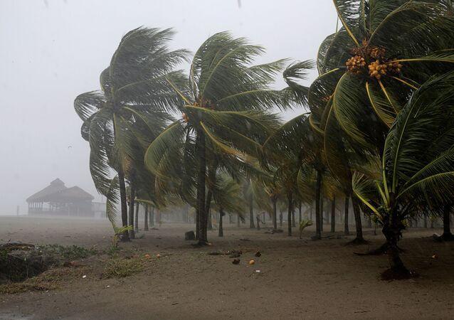 Palm trees sway in the wind as Hurricane Eta approaches, in Tela, Honduras November 3, 2020.