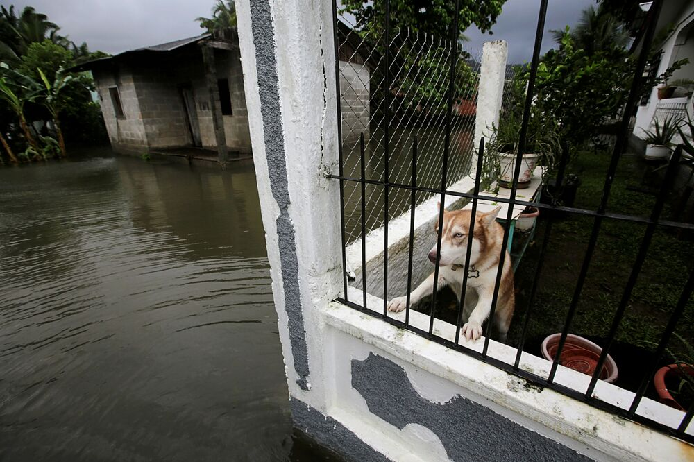 A dog is pictured inside a house in a neighbourhood affected by flooding as Hurricane Eta approaches, in Tela, Honduras, 3 November 2020.