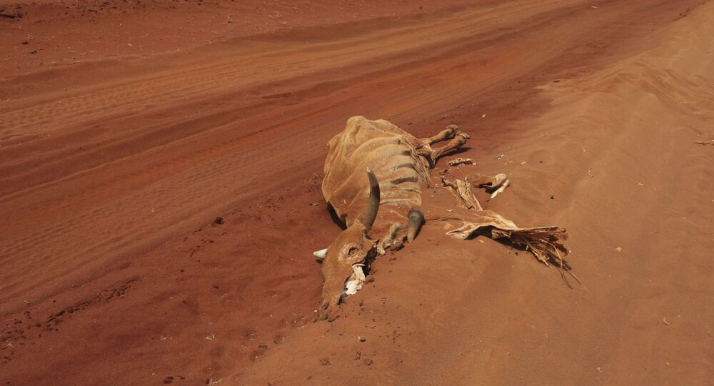 The carcase of a cow lies on an empty road near Lagbogal, 56 kilometers from Wajir town, Kenya, Wednesday, July 6, 2011