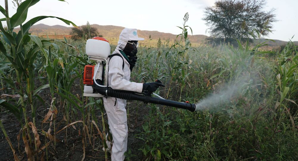 A man sprays pesticides against a swarm of locusts at a farm in Jawaha village near Kamise town, Amhara region, Ethiopia October 15, 2020. Picture taken October 15, 2020