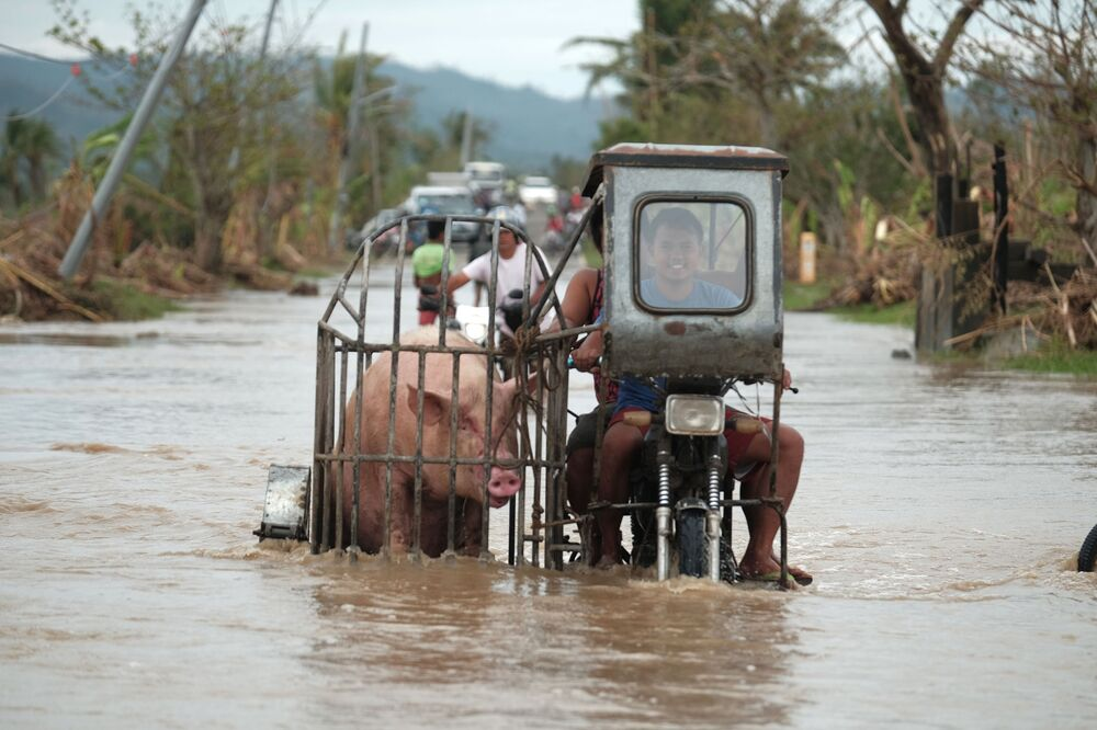 A motorcycle carrying a pig crosses a road in Albay province, central Philippines which has been flooded because of Typhoon Vamco on Thursday, 12 November 2020.