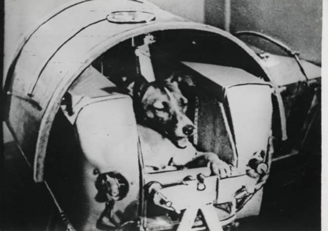 The dog Laika, first animal to orbit the Earth, before launch, November 3, 1957.