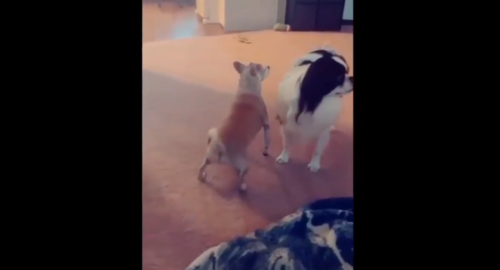 Twerking dog