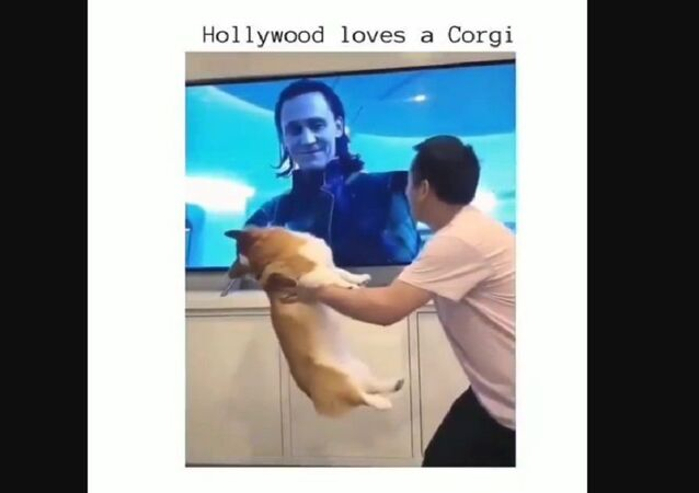 Loki loves corgi too
