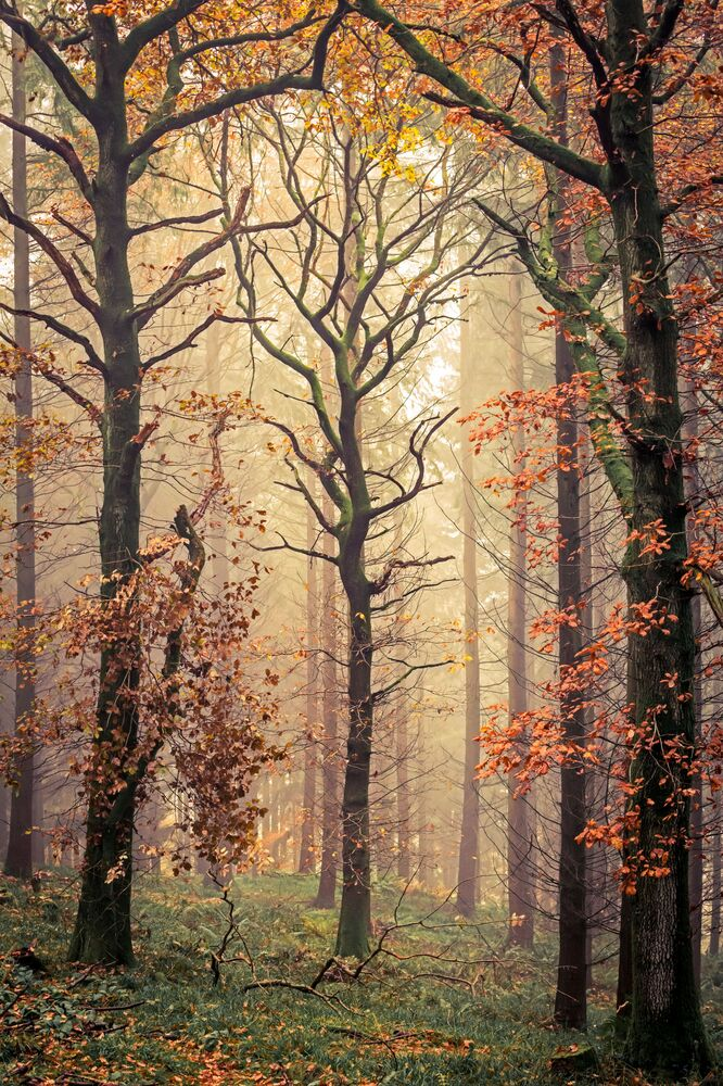 The photo Mortimer's Tree by British photographer David G Jones, which was included in TOP-101 of The International Landscape Photographer of the Year 2020.