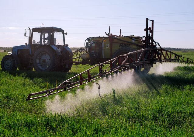 A tractor fertilizers winter cereals at a collective farm in the Teikovsky district of the Ivanovo region