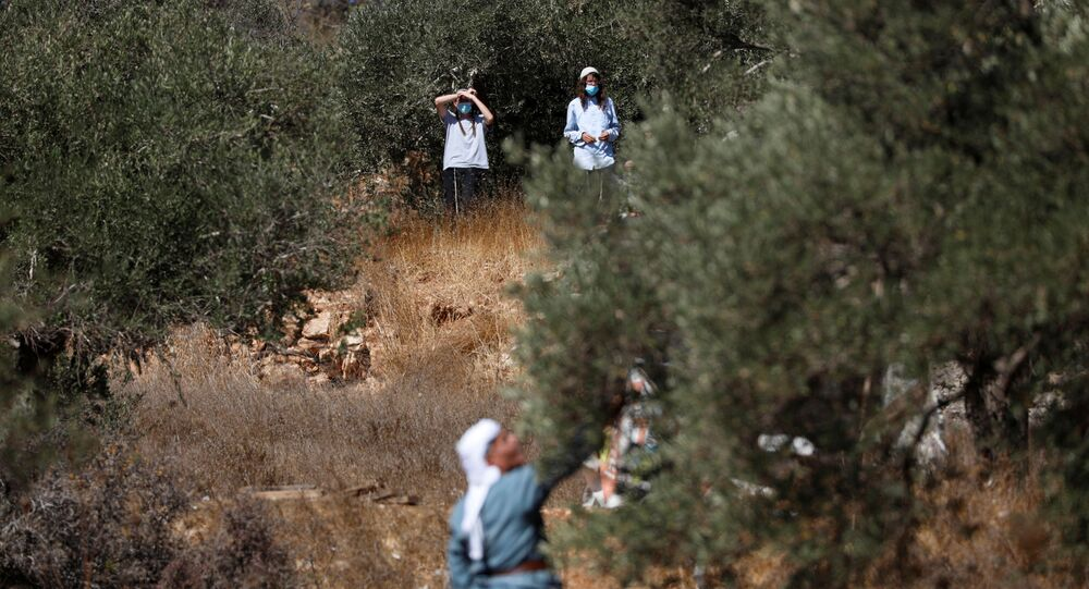 Israeli settlers watch as a Palestinian man as he picks up olives near a Jewish settlement outpost near Ramallah in the Israeli-occupied West Bank October 16, 2020. Picture taken October 16, 2020. REUTERS/Mohamad Torokman