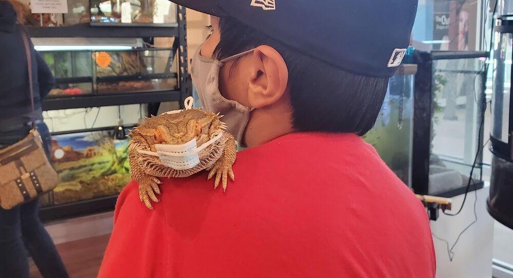 Lizard Wearing A Mask