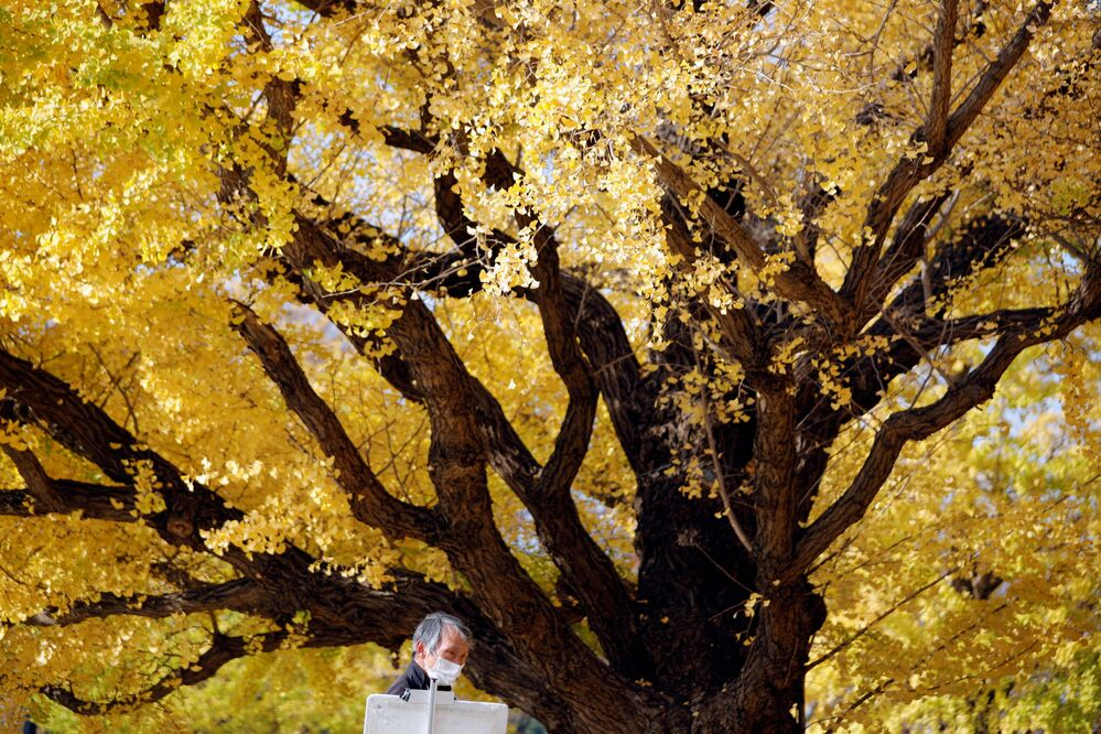 A man wearing a protective face mask draws a picture under colourful autumn leaves, amid the coronavirus disease (COVID-19) outbreak, in Tokyo, Japan 18 November 2020.