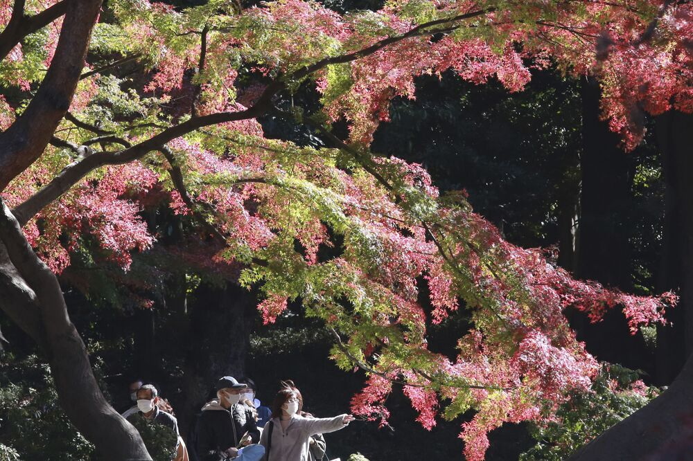 Visitors wearing face masks to protect against the spread of the coronavirus walk through the colourful autumn leaves at a park in Tokyo, Monday, 23 Nov 2020.