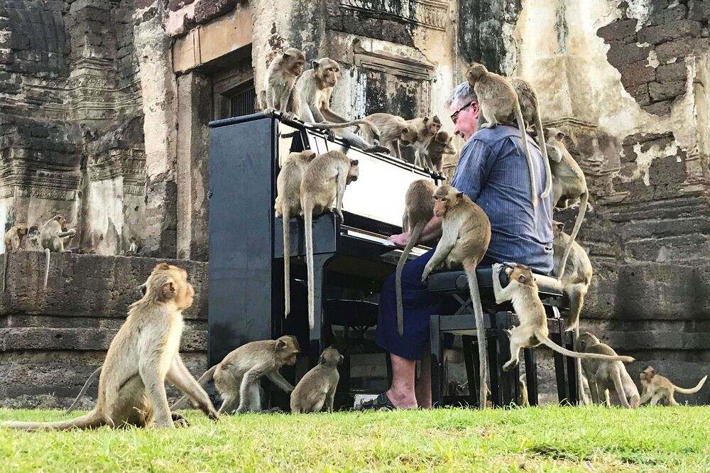 British musician Paul Barton plays the piano for monkeys that occupy abandoned historical areas in Lopburi, Thailand, 21 November 2020.