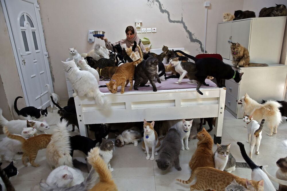 Maryam Al Balushi feeds her pets in her home Oman's capital Muscat on 20 November, 2020. Despite complaints from neighbours and mounting expense, she has accumulated 480 cats and 12 dogs, describing her pets as a mood-lifter and better companions than her fellow humans.