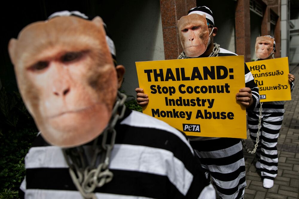 Animal rights activists from the People for the Ethical Treatment of Animals (PETA), dressed as chained monkeys, stage a protest against what they say is monkey abuse in Thailand's coconut industry following a PETA investigation, outside the Royal Thai Embassy in Makati City, Metro Manila, Philippines, 25 November 2020