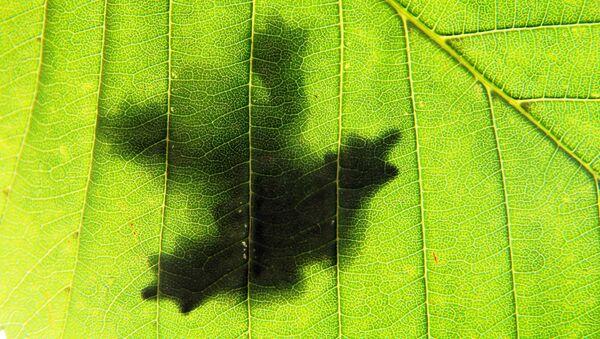 shadow of a frog sitting on a leaf - Sputnik International