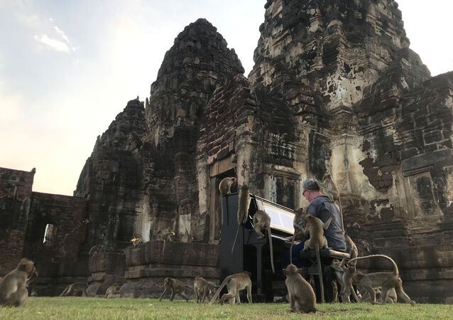 British musician Paul Barton plays the piano for monkeys that occupy abandoned historical areas in Lopburi, Thailand November 21 2020. Picture taken November 21, 2020.