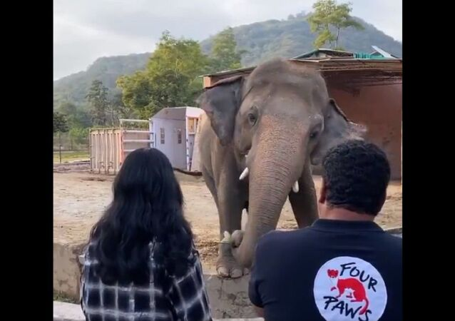 If your heart doesn't melt seeing  Cher  singing to Kaavan