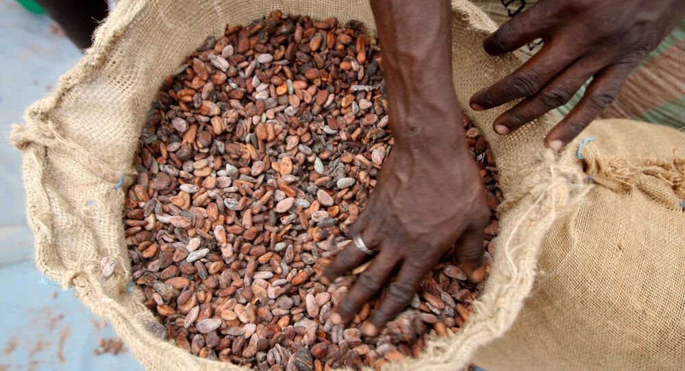 A man prepares cocoa beans for sale in Daloa, Ivory Coast, April 24, 2012. REUTERS/ Thierry Gouegnon/File Photo