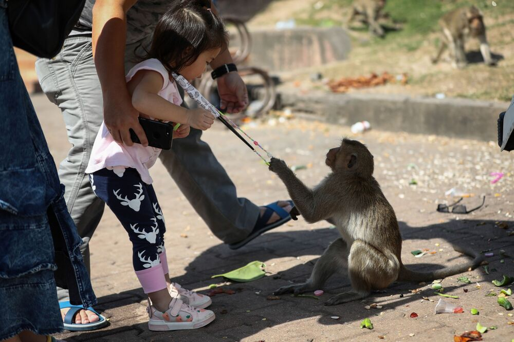A monkey attempts to take hold of a girl's face mask in front of the Prang Sam Yod Temple during the annual Monkey Buffet Festival in Lopburi province, north of Bangkok on 29 November 2020.