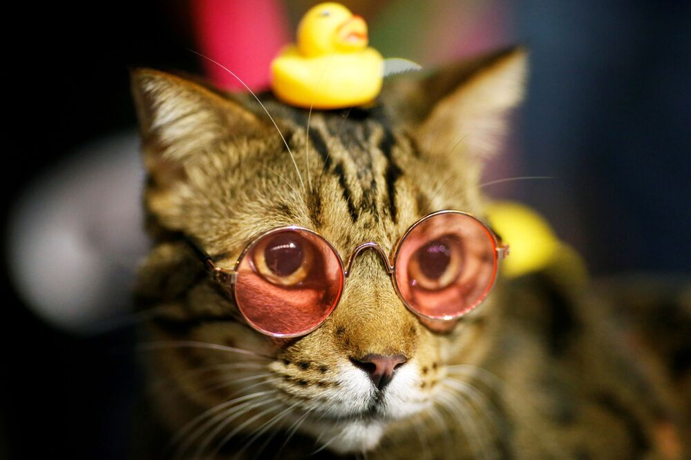 A cat wearing sunglasses is pictured as a pro-democracy activists protest after the constitutional court's ruling on Prime Minister Prayuth Chan-ocha's conflict of interest case, in Bangkok, Thailand, 2 December 2020.