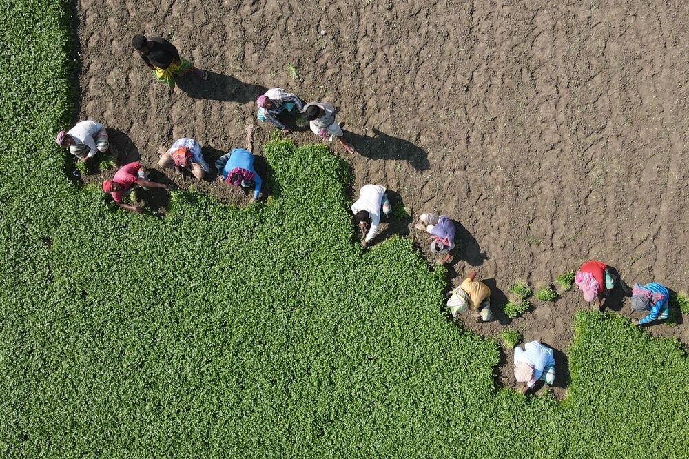An aerial photo of labourers working in a field in Karanigonj, outskirts of Dhaka on 30 November 2020.