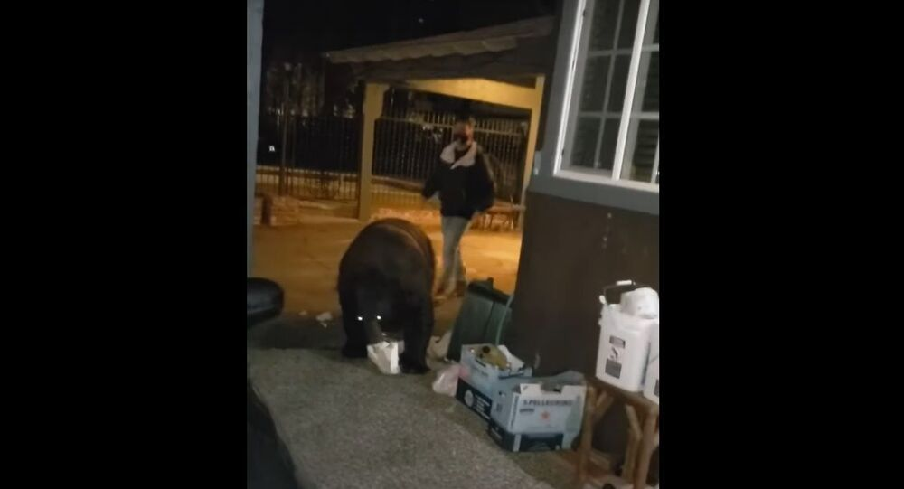 """The eight-second video clip was shared by ViralHog with the caption """"Hotel Guest Unknowingly Walks Right Next to Bear Digging Through Garbage""""."""
