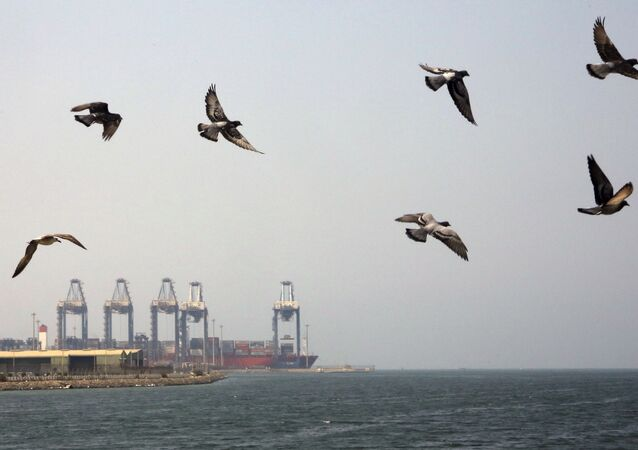 Seagulls fly over the Red Sea port city of Jiddah, Saudi Arabia, Friday, Oct. 11, 2019. Iranian officials say two missiles struck an Iranian tanker traveling through the Red Sea off the coast of Saudi Arabia.