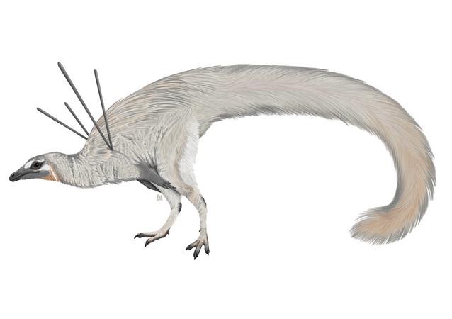 A life reconstruction of Ubiraja jubatus