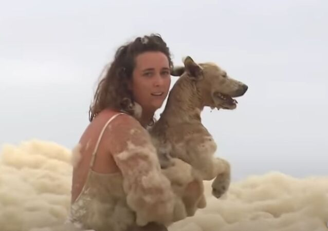 Woman rescues dog from seafoam along Australia's coast