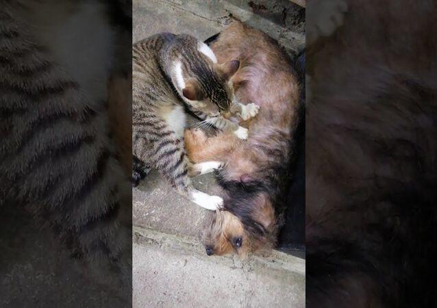 Mama Dog Enjoys Friendly Massage From Rescue Cat Best Friend || ViralHog