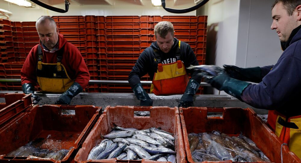 Fishermen sort fishes aboard the Boulogne-sur-Mer based trawler Nicolas Jeremy in the North Sea, off the coast of northern France, December 7, 2020.