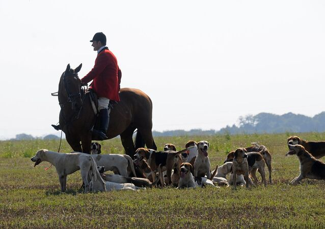 Hunter and hounds