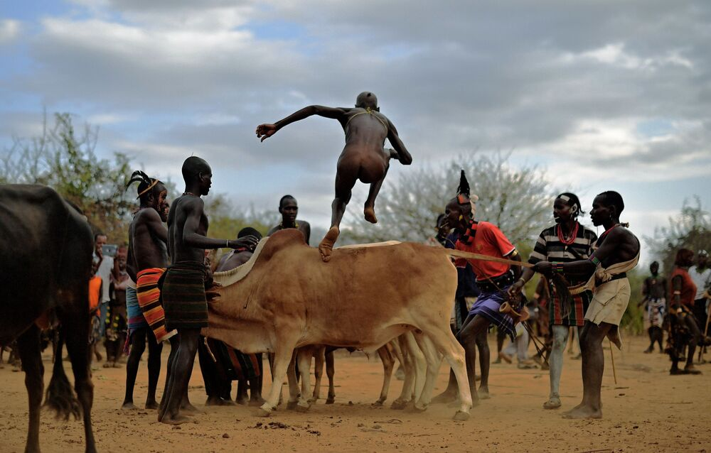 The Hamar tribe lives in one of the districts of the Ethiopian Omo Valley. Here, when a young boy wants to become an adult and build his own family, he must go through an ancient ritual - running over the backs of 7 to 10 bulls without falling four times.    Above: A man from the Hamar tribe takes part in a bull jumping ceremony in Ethiopia's southern Omo Valley region near Turmi on 19 September 2016.