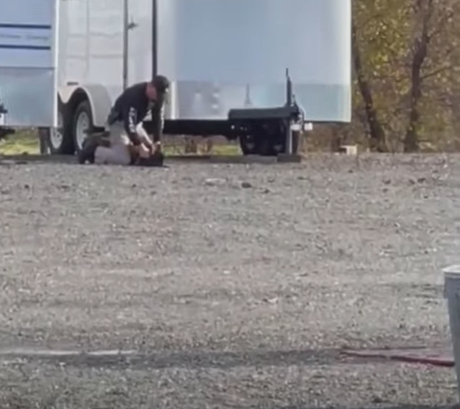 US Officer Caught on Camera Repeatedly Punching Police Dog