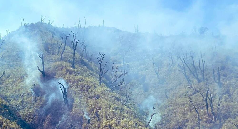 Officials from the Nagaland State Disaster Management Authority (NSDMA) said it is not known why the massive fire broke out.