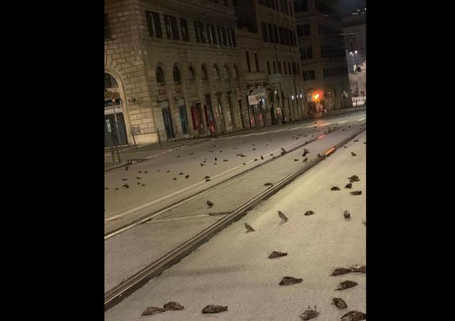 Dead birds in Rome, Italy