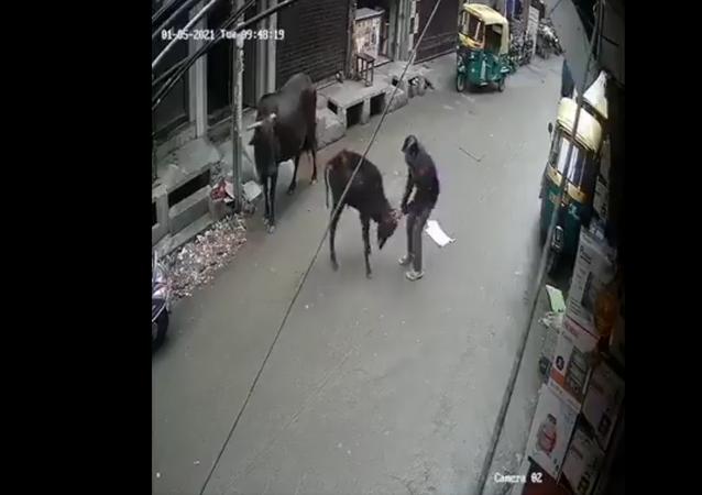 man beats calf