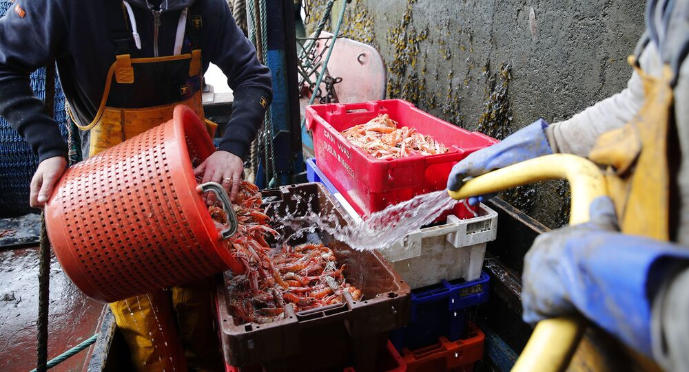 In this picture taken 3 September 2019, fisherman and crewman Alan Ferguson, right, unloads crates of freshly caught langoustines in the port of Eyemouth, on the south coast of Edinburgh, Scotland. In their drive to uncouple Britain from the European Union, pro-Brexit campaigners have made fishing one of their battlegrounds