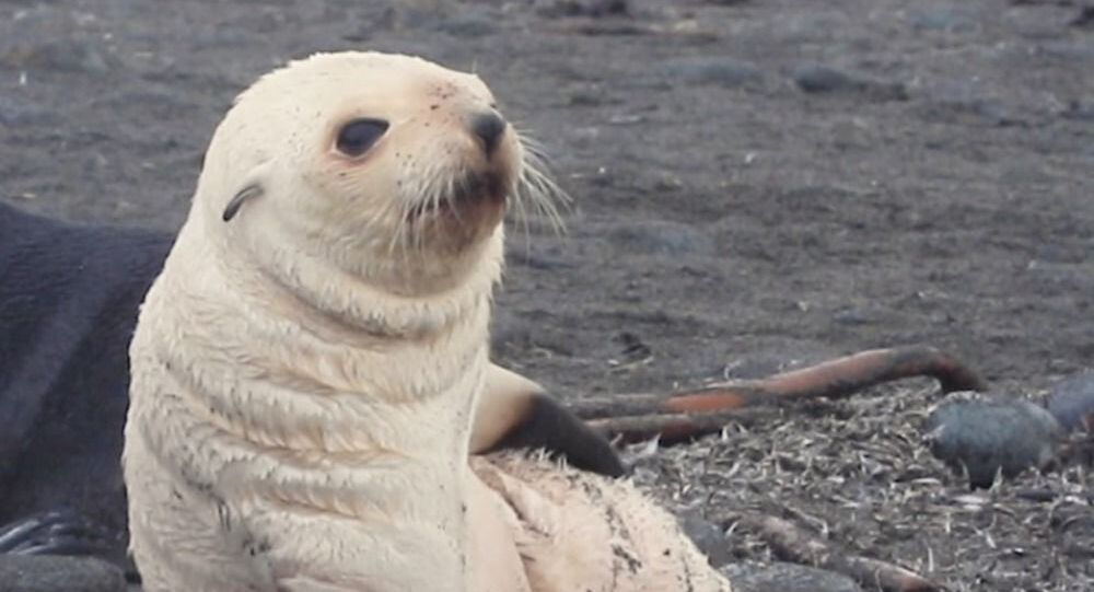Seal Puppy Deals With Its Itch in Style