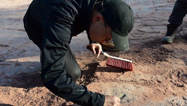 Scientists study dinosaur footprints - Sputnik International